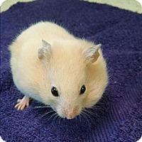 Adopt A Pet :: Dancer - Madison, NJ
