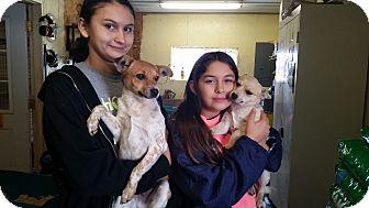 Rat Terrier/Australian Cattle Dog Mix Dog for adoption in Walthill, Nebraska - Snuggle