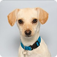Adopt A Pet :: Ritter - San Luis Obispo, CA