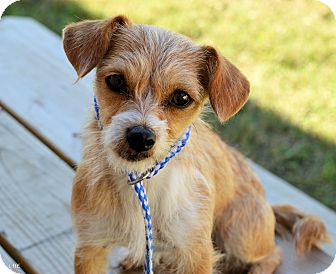 Terrier (Unknown Type, Small) Mix Dog for adoption in Bedminster, New Jersey - Donatella