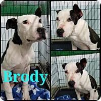 Adopt A Pet :: Brody - California City, CA