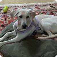 Adopt A Pet :: Molly - San Francisco, CA