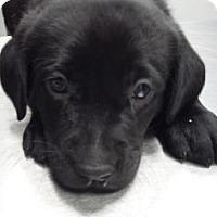Adopt A Pet :: Ester - Paducah, KY