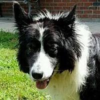 Adopt A Pet :: Danny Boy - Minerva, OH