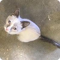Adopt A Pet :: Joy - Redding, CA