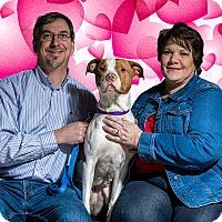 Adopt A Pet :: Rosie - Adopted 02/04/2017 - Livonia, MI