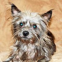 Adopt A Pet :: Griffin (CP) - Fremont, CA