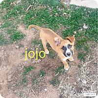 Adopt A Pet :: Jojo - Snyder, TX