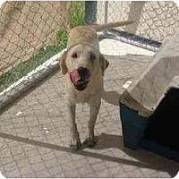 Adopt A Pet :: Chico - Alexandria, VA
