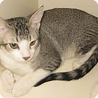 Adopt A Pet :: Cooper - Dallas, TX