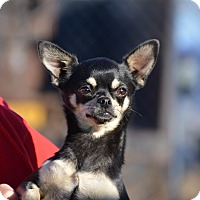 Adopt A Pet :: Becka - Meridian, ID