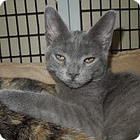 Adopt A Pet :: Balou - Medina, OH