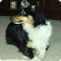 Adopt A Pet :: Maggie - Mission, KS