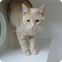 Adopt A Pet :: Jagger - Hamburg, NY