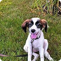 Adopt A Pet :: Katie - Marlton, NJ
