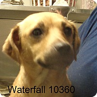 Adopt A Pet :: WaterFall - baltimore, MD