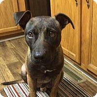 Adopt A Pet :: Earnest T(CL) - Greensboro, NC