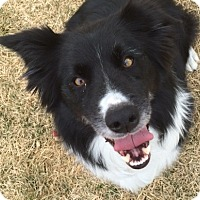 Adopt A Pet :: Jill - Buffalo, WY