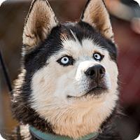Adopt A Pet :: Tuktu - Cedar Crest, NM
