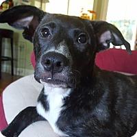 Adopt A Pet :: Gretchen - PORTLAND, ME