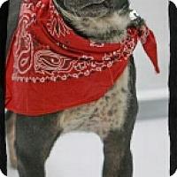 Adopt A Pet :: Elicia - Old Saybrook, CT