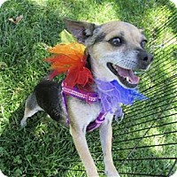 Adopt A Pet :: Judy - Pleasanton, CA