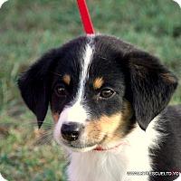 Adopt A Pet :: ANNIE/ADOPTED - parissipany, NJ