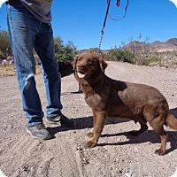 Adopt A Pet :: Bailey - Golden Valley, AZ