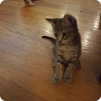 Adopt A Pet :: Wendy, John and Michael - Berkeley Hts, NJ