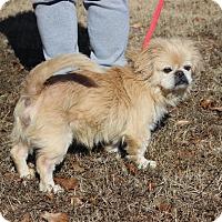 Adopt A Pet :: Dukky - Fairfax Station, VA