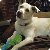 Adopt A Pet :: Princess-PENDING - West Allis, WI