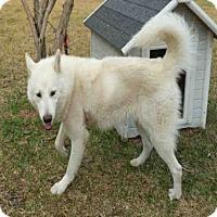 Adopt A Pet :: A009913 - Rosenberg, TX