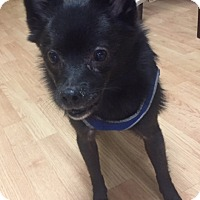 Adopt A Pet :: Buddy - Rochester, NY