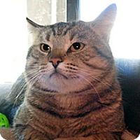 Adopt A Pet :: Thomas - Wildomar, CA