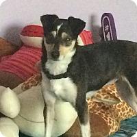 Adopt A Pet :: Paris - Owensboro, KY