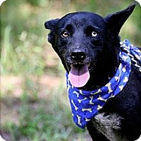 Adopt A Pet :: Ruger - Thomaston, GA