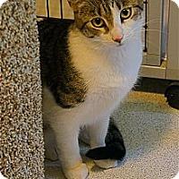 Adopt A Pet :: Sabrina - Victor, NY