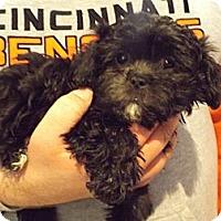 Adopt A Pet :: Suzie - Northumberland, ON