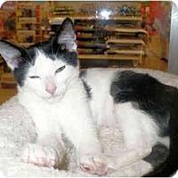 Adopt A Pet :: Tootsie - Colmar, PA