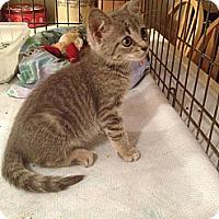 Adopt A Pet :: Paulina - Ft. Lauderdale, FL