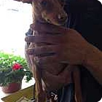 Adopt A Pet :: Skittles - McDonough, GA