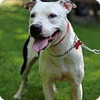 Adopt A Pet :: Suzie - Tinton Falls, NJ