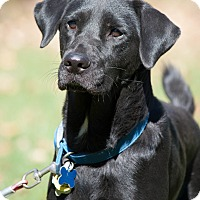 Adopt A Pet :: Ivanka - Lewisville, IN