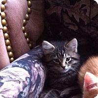 Adopt A Pet :: Felix - Douglas, ON