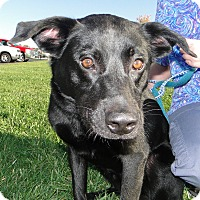 Adopt A Pet :: Ranger - Salem, MA