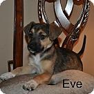 Adopt A Pet :: Julie's Pup - Eve