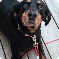 Adopt A Pet :: Jezzy - Atlanta, GA
