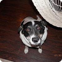 Adopt A Pet :: Mitzi Mittens - Phoenix, AZ
