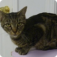 Adopt A Pet :: Hammy - Hamburg, NY