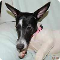 Adopt A Pet :: Jules - Umatilla, FL